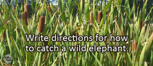 Writing Prompt for Friday, September 14: Wild Elephant