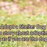 Writing Prompt for October 19: Shelter Dog