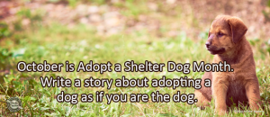 Writing Prompt for October 19: Shelter Dog