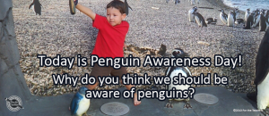 Writing Prompt for January 20: Penguin
